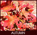 Stanthorpe in Autumn, find out more...